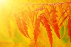 Κλάδος δέντρων φθινοπώρου στοκ εικόνες με δικαίωμα ελεύθερης χρήσης