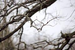 Κλάδος δέντρων στοκ φωτογραφία με δικαίωμα ελεύθερης χρήσης