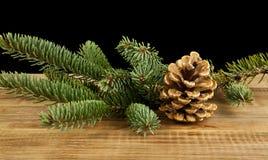 Κλάδος δέντρων Στοκ Εικόνα