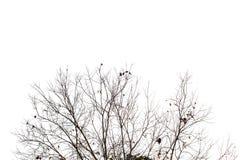 Κλάδος δέντρων Στοκ Φωτογραφίες