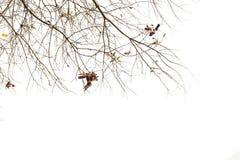Κλάδος δέντρων Στοκ Εικόνες