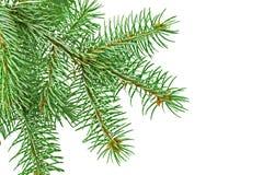 Κλάδος γούνα-δέντρων στοκ εικόνα με δικαίωμα ελεύθερης χρήσης