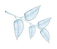 Κλάδος ενός δέντρου με τα φύλλα, φιαγμένος από παφλασμούς νερού Στοκ εικόνες με δικαίωμα ελεύθερης χρήσης