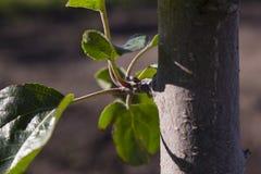 Κλάδος ενός δέντρου με τα φύλλα Στοκ Φωτογραφίες