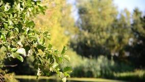 Κλάδος λευκών κοντά στον ποταμό μια ηλιόλουστη ημέρα απόθεμα βίντεο