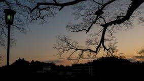 Κλάδος και ελαφριά σκιαγραφία πόλων στο ηλιοβασίλεμα Στοκ Εικόνα