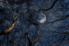 Κλάδος και το φεγγάρι Στοκ εικόνες με δικαίωμα ελεύθερης χρήσης