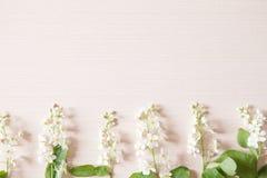 Κλάδος με τα μικροσκοπικά άσπρα λουλούδια Στοκ Φωτογραφίες