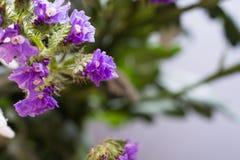 κλάδος με τα πορφυρά λουλούδια Στοκ εικόνα με δικαίωμα ελεύθερης χρήσης