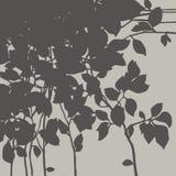 Κλάδος με τα φύλλα Στοκ φωτογραφίες με δικαίωμα ελεύθερης χρήσης