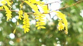 Κλάδος με τα φύλλα απόθεμα βίντεο