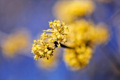 κλάδος με το κίτρινο λουλούδι στοκ φωτογραφία με δικαίωμα ελεύθερης χρήσης