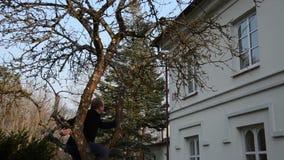 Κλάδος οπωρωφόρων δέντρων μήλων περιποίησης ατόμων με το ειδικό εργαλείο την άνοιξη απόθεμα βίντεο