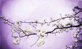 Κλάδος λουλουδιών άνοιξη Στοκ εικόνα με δικαίωμα ελεύθερης χρήσης