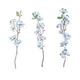 Κλάδος λουλουδιών στο λευκό Στοκ φωτογραφία με δικαίωμα ελεύθερης χρήσης