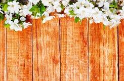 Κλάδος λουλουδιών της Apple σε ξύλινο Στοκ φωτογραφίες με δικαίωμα ελεύθερης χρήσης