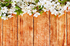 Κλάδος λουλουδιών της Apple σε ξύλινο Στοκ εικόνα με δικαίωμα ελεύθερης χρήσης