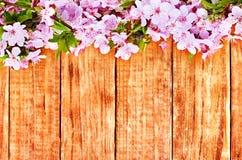 Κλάδος λουλουδιών της Apple σε ξύλινο Στοκ εικόνες με δικαίωμα ελεύθερης χρήσης