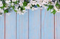 Κλάδος λουλουδιών της Apple σε ξύλινο Στοκ Εικόνες