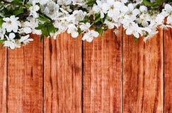 Κλάδος λουλουδιών της Apple σε ξύλινο Στοκ Εικόνα