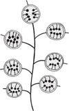 Κλάδος λουλουδιών Lunaria - χρωματίζοντας σελίδα για τους ενηλίκους Στοκ φωτογραφίες με δικαίωμα ελεύθερης χρήσης
