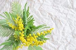 Κλάδος λουλουδιών Mimose Στοκ εικόνα με δικαίωμα ελεύθερης χρήσης