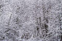 κλάδος παγωμένος Στοκ φωτογραφίες με δικαίωμα ελεύθερης χρήσης