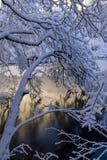 κλάδος παγωμένος Στοκ εικόνα με δικαίωμα ελεύθερης χρήσης
