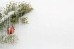 Κλάδος πεύκων με τη σφαίρα ενός κόκκινου νέου έτους Στοκ Εικόνες