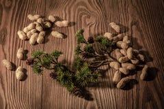 Κλάδος πεύκων με τους κώνους και τα καρύδια πεύκων σε ένα ξύλινο υπόβαθρο 2 Στοκ Εικόνες