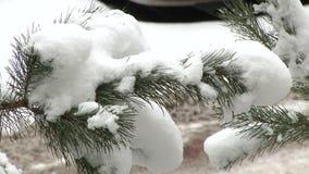 Κλάδος πεύκων με το χιόνι φιλμ μικρού μήκους