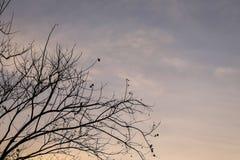 Κλάδος σκιαγραφιών του δέντρου Στοκ εικόνα με δικαίωμα ελεύθερης χρήσης