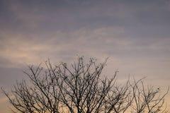 Κλάδος σκιαγραφιών του δέντρου Στοκ φωτογραφία με δικαίωμα ελεύθερης χρήσης