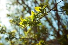 Κλάδος στον ήλιο Στοκ εικόνες με δικαίωμα ελεύθερης χρήσης