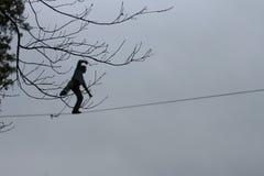 Κλάδος στο άτομο υποβάθρου που περπατά στο highline Στοκ Εικόνες