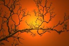 Κλάδος στο πορτοκάλι Στοκ εικόνες με δικαίωμα ελεύθερης χρήσης