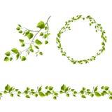 Κλάδος του δέντρου με τα πράσινα φύλλα ελεύθερη απεικόνιση δικαιώματος