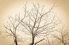 Κλάδος του δέντρου Στοκ Εικόνες