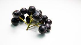 Κλάδος του μαύρου chokeberry melanocarpa Aronia Στοκ εικόνες με δικαίωμα ελεύθερης χρήσης