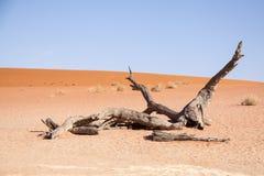 Κλάδος του νεκρού δέντρου σε Deadvlei, έρημος Namib, Ναμίμπια Στοκ Εικόνες