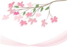 Κλάδος του ρόδινου λουλουδιού διανυσματική απεικόνιση