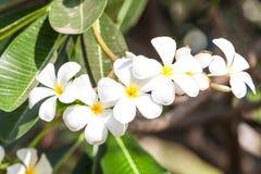 Κλάδος των τροπικών λουλουδιών Στοκ Εικόνες