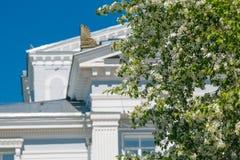 Κλάδος των ανθών της Apple σε ένα υπόβαθρο των αστικών κτηρίων Στοκ Εικόνα