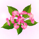 Κλάδος των λουλουδιών ανθών κερασιών Στοκ εικόνα με δικαίωμα ελεύθερης χρήσης