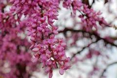 Κλάδος των λουλουδιών Στοκ Εικόνες