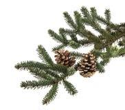 Κλάδος χριστουγεννιάτικων δέντρων με τους κώνους πεύκων Στοκ φωτογραφία με δικαίωμα ελεύθερης χρήσης