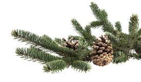 Κλάδος χριστουγεννιάτικων δέντρων με τους κώνους πεύκων Στοκ εικόνες με δικαίωμα ελεύθερης χρήσης