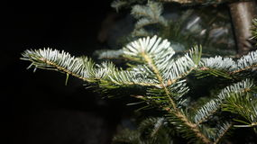 Κλάδος χριστουγεννιάτικων δέντρων Στοκ εικόνες με δικαίωμα ελεύθερης χρήσης