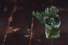 Κλάδος fir-tree σε ένα γυαλί νερού Στοκ φωτογραφίες με δικαίωμα ελεύθερης χρήσης