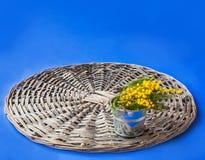 Κλάδος Mimosa Στοκ φωτογραφία με δικαίωμα ελεύθερης χρήσης